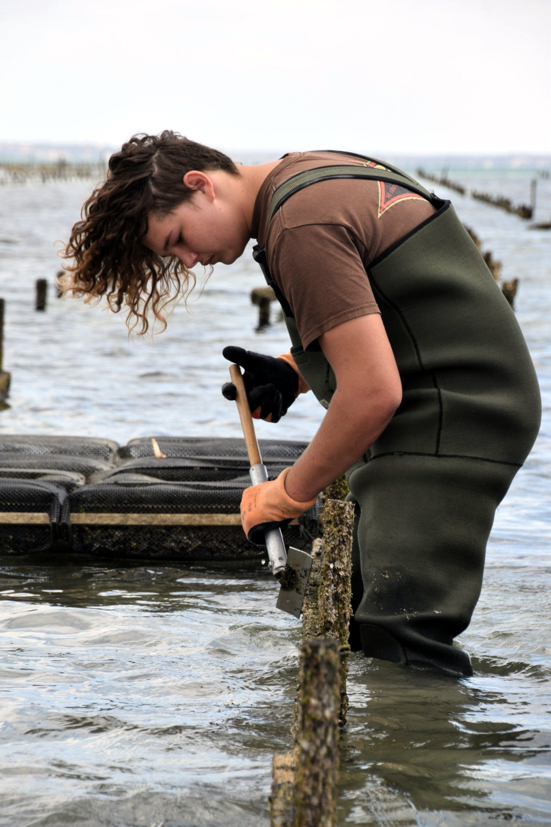 Oyster Farm Tours Working on oyster lease