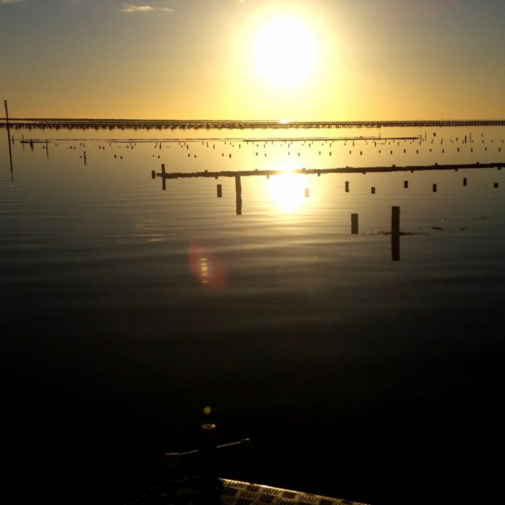 Oyster Farm Sunset Tours